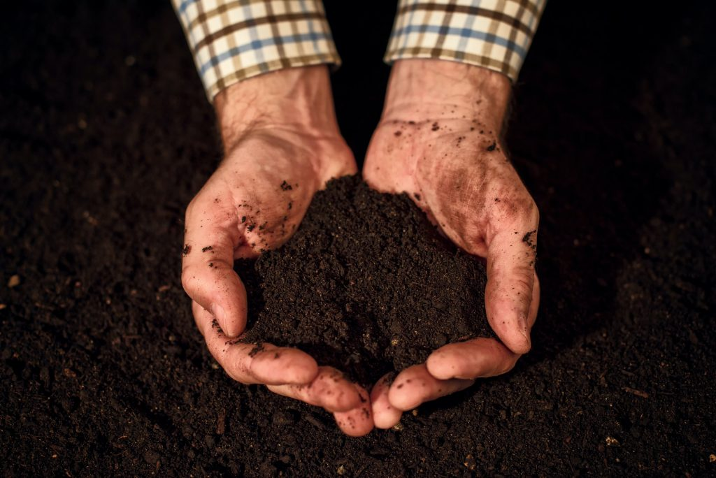 Quality soil in male gardener hands